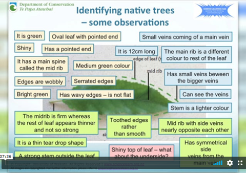 Native Trees Webinar