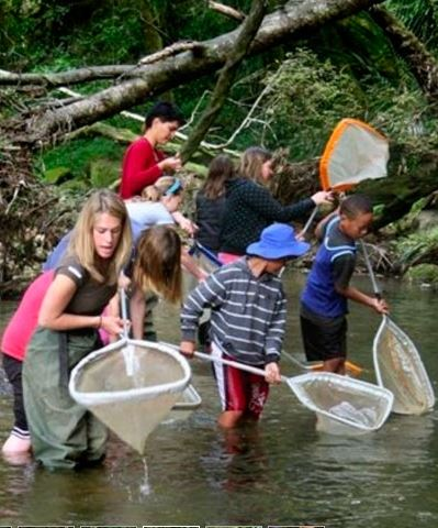 Whitebait Connection students in stream with nets