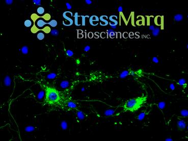 StressMarq