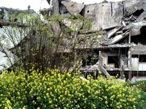 Flowers bloom amid destruction in Homs, Syria