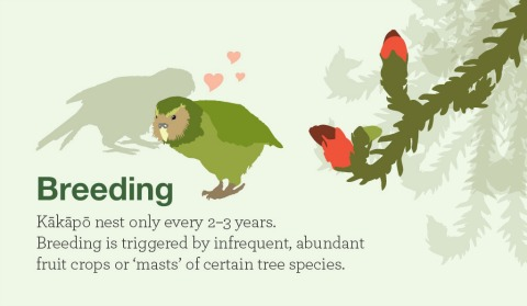 Infographic about breeding