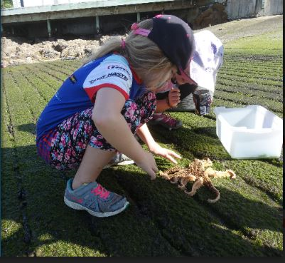 Finding and identifying a starfish while doing the marine metre squared project.