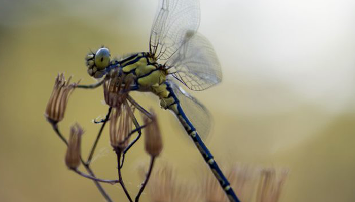 A dragon fly sitting on a flower