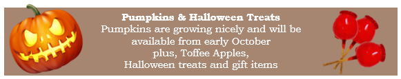 Bury Lane Farm Shop Halloween September 2017 Newsletter