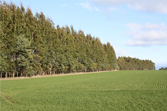 row of trees facing a paddock