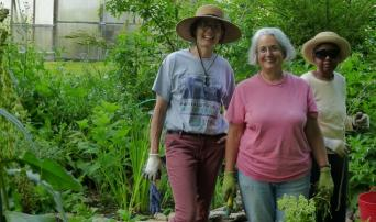 Awbury's Stewards of the Food Forest