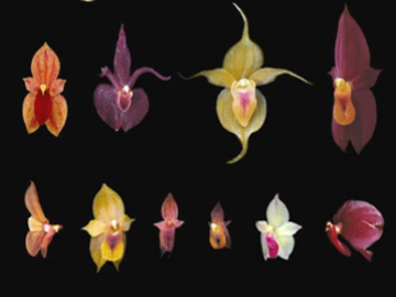 Orchids. © Fundación EcoMinga.