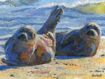 Harbour Seals on the beach by Paul Bartlett.