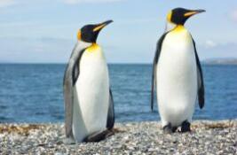 Job vacancy Falkland Islands