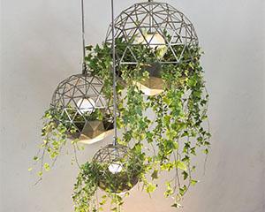 voorbeeld recyclage planten