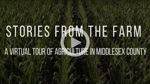 MFA - Stories From The Farm