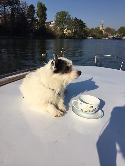 Cath Kidston ducks teacup